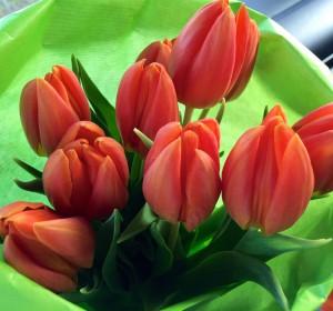 Oranje Tulpen uit .. Utrecht - De Oranje Man